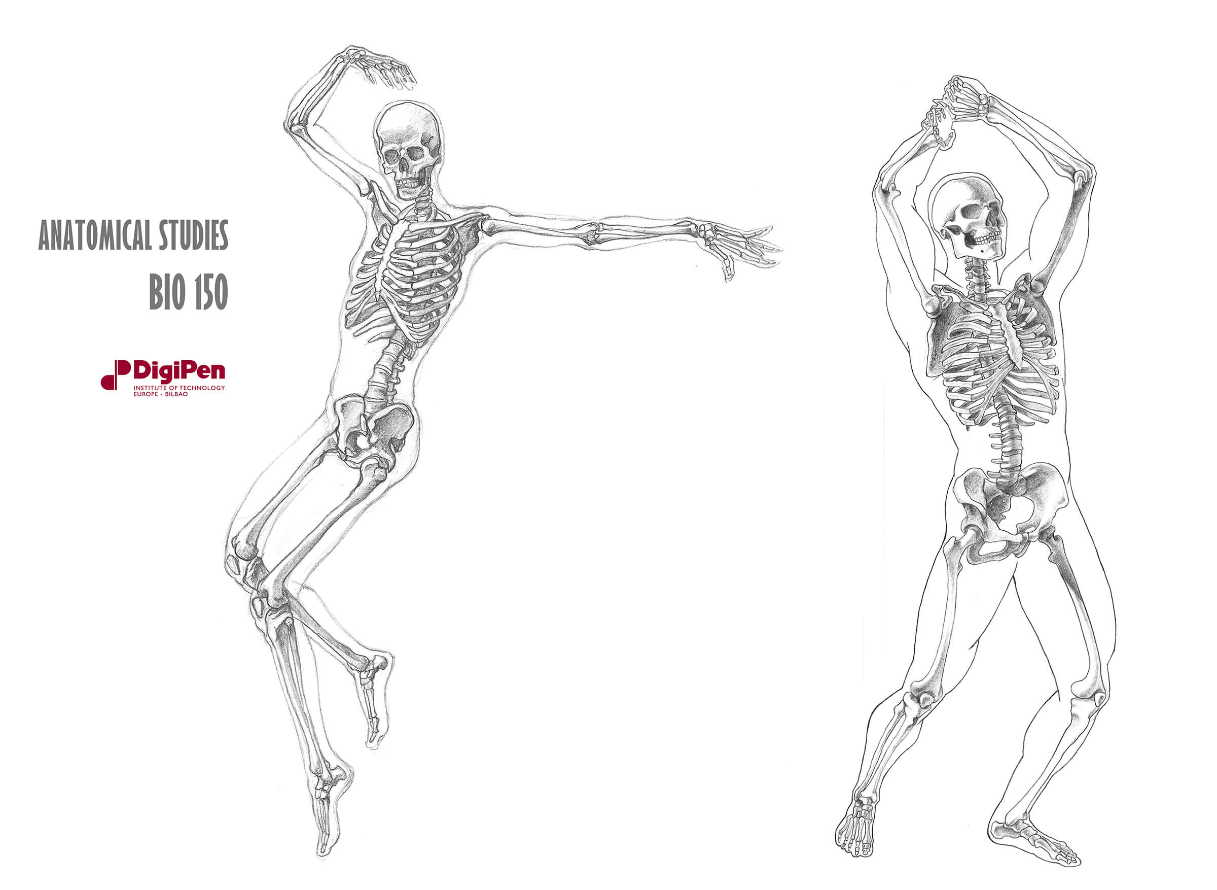 Black-and-white anatomical sketches of two human skeletons, one in a dancing pose, the other pantomiming lifting an ax.