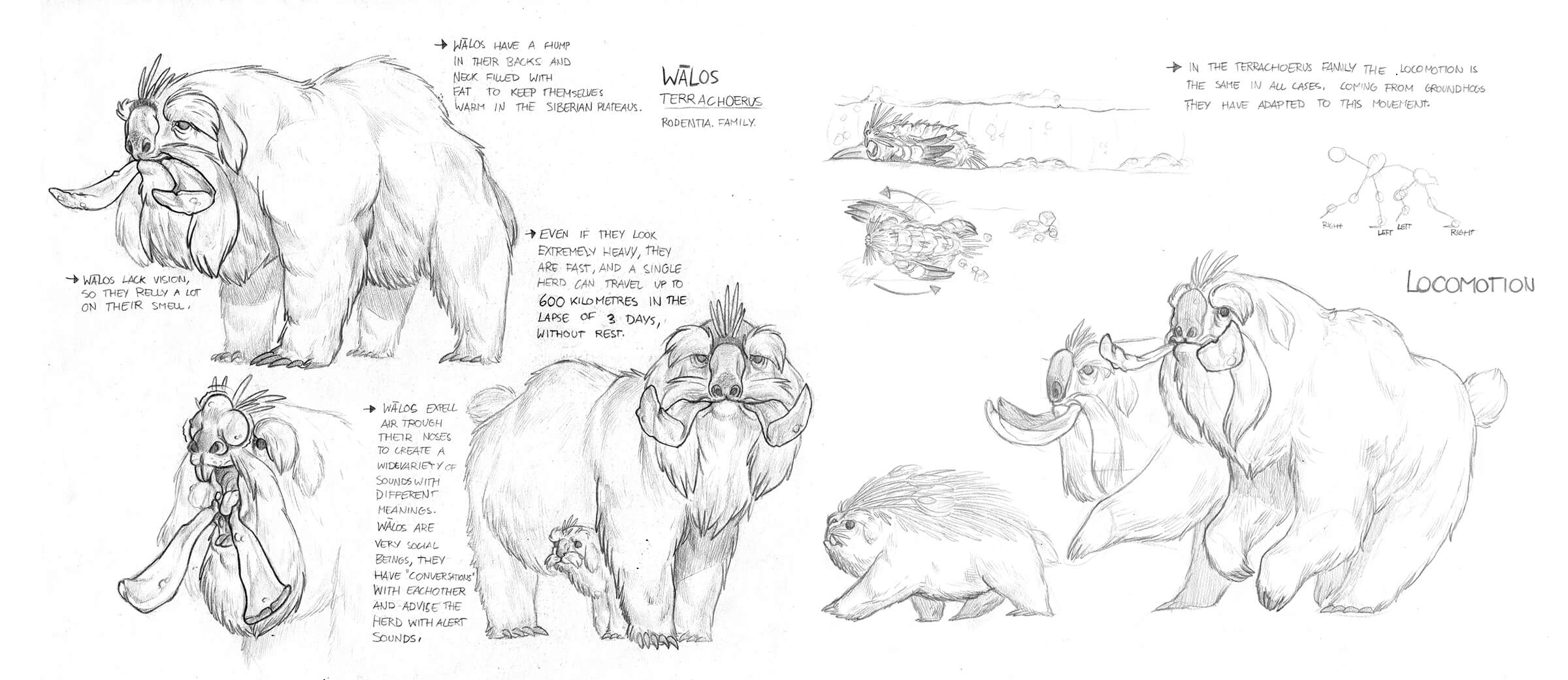 Black-and-white sketches of a fantastical white furry beast with features of a bear, dog, and boar as it stands and runs.