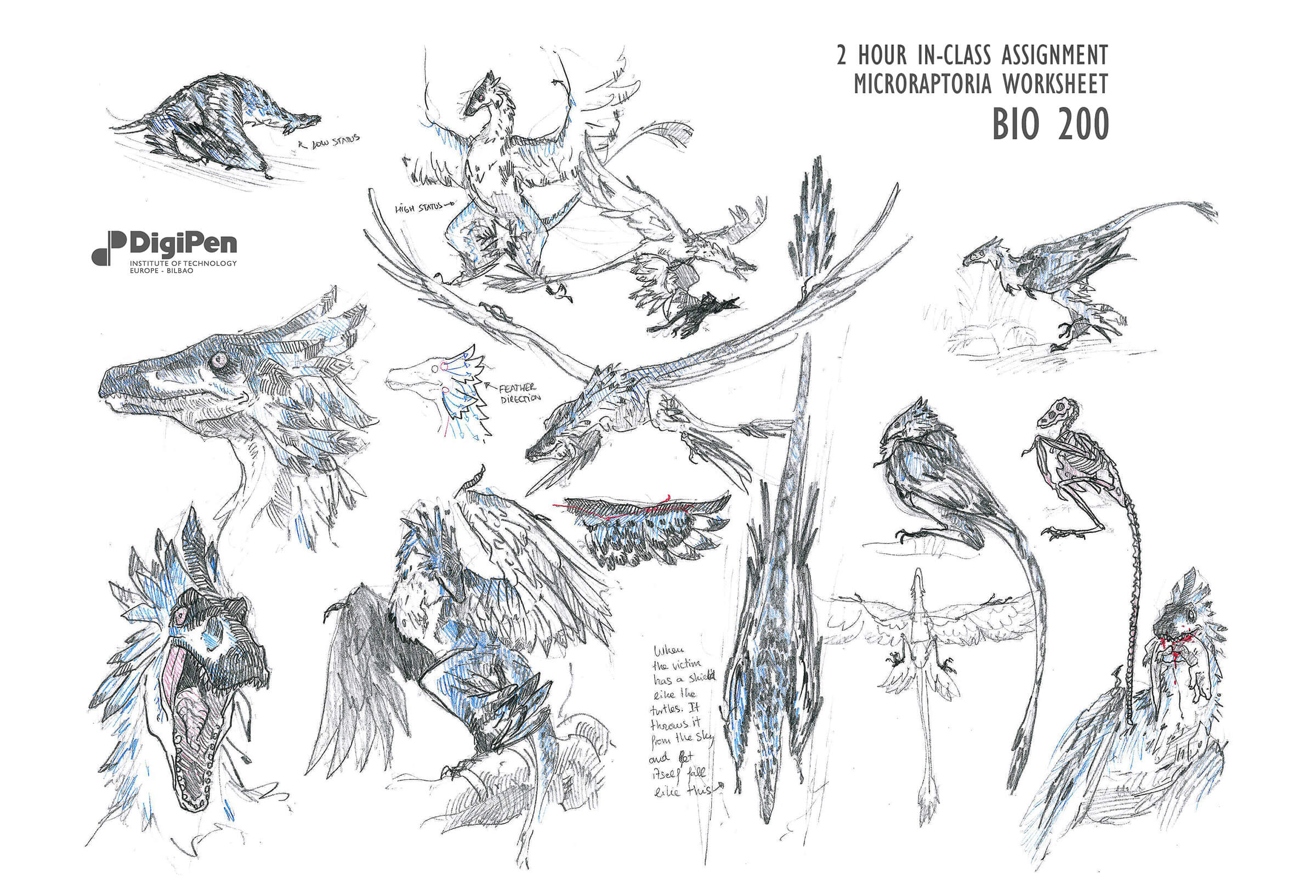 Black-and-white sketches of a feathered prehistoric raptor in poses such as flight, perching, eating, and walking