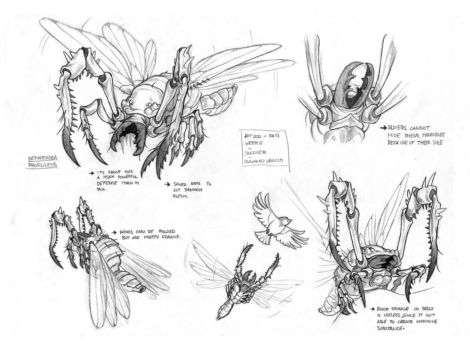 Black-and-white sketches of a fantastical flying insectoid with large pinching jaws, including its life cycle and prey.