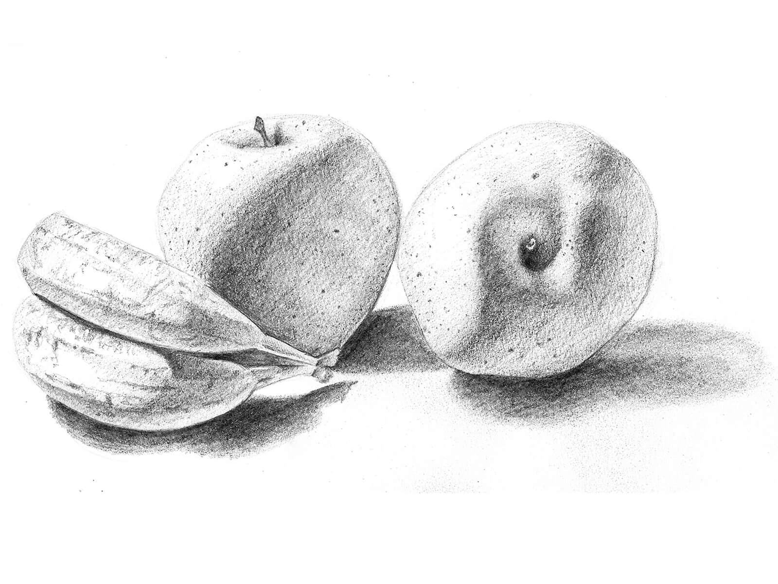 Black-and-white drawing of a pair of bananas turned on its side next to two apples. The fruit is lit from the left.